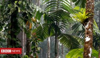Amazon Fires: Why the rainforest helps fight climate change