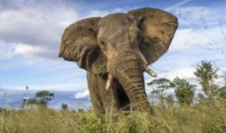 At least 55 elephants die in Zimbabwe drought