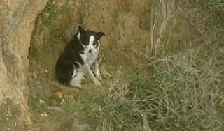 Jimmy the border collie rescued from cliff in Australia