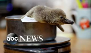 Baby penguin, cold weather and protests in Bolivia: World in Photos, Nov. 11