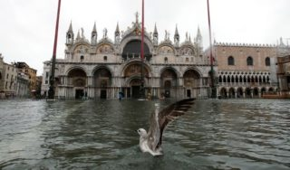Venice inundated as highest tide in 50 years sweeps through city