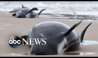 Beached whales, COVID-19 memorial, wildfires continue; World in Photos, Sept. 22