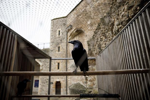 BRITAIN-LIFESTYLE-TOURISM-ROYALS-RAVENS-TOWER