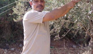 Settler attacks leave Palestinian farmers with financial losses